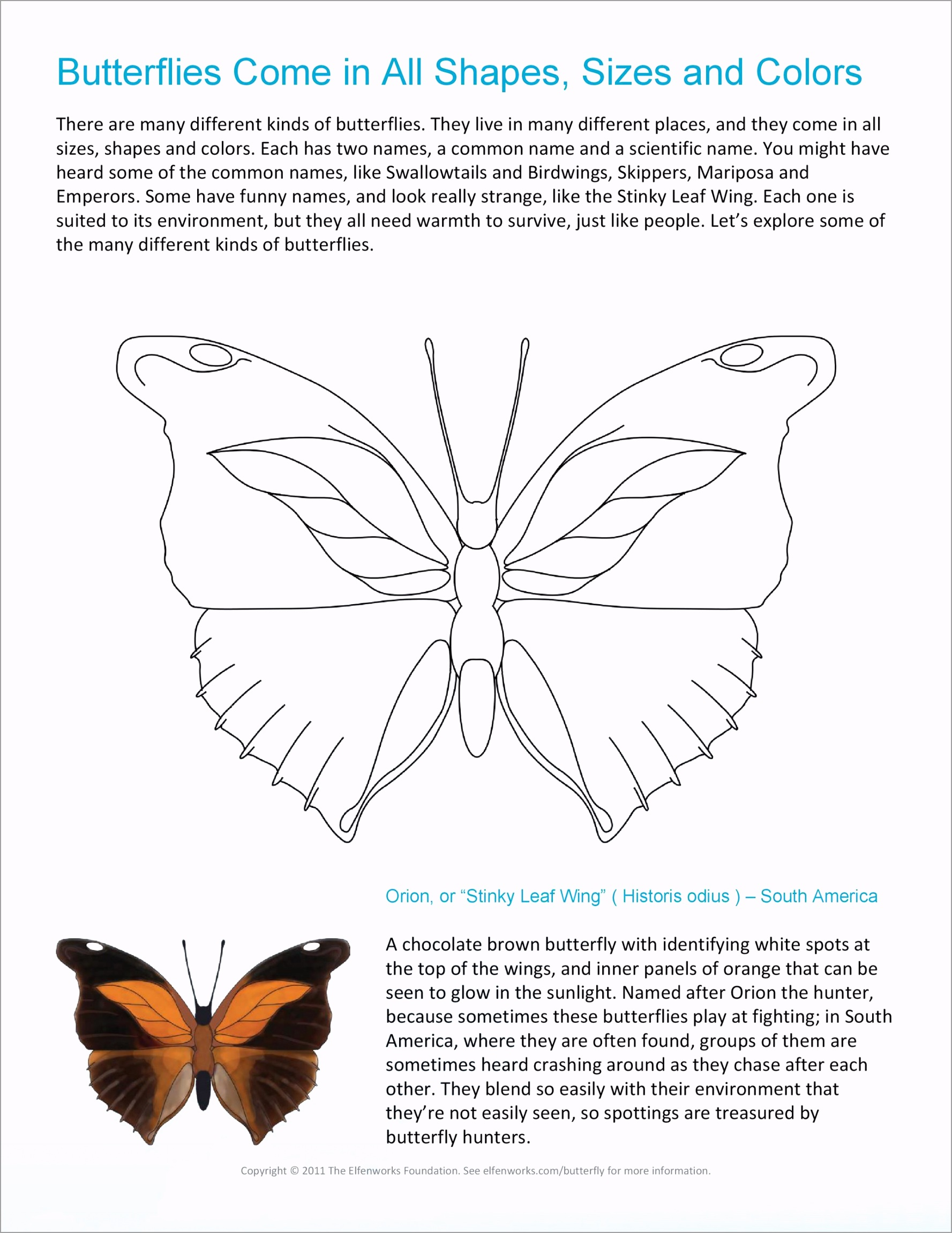 butterfly template 01 ruali