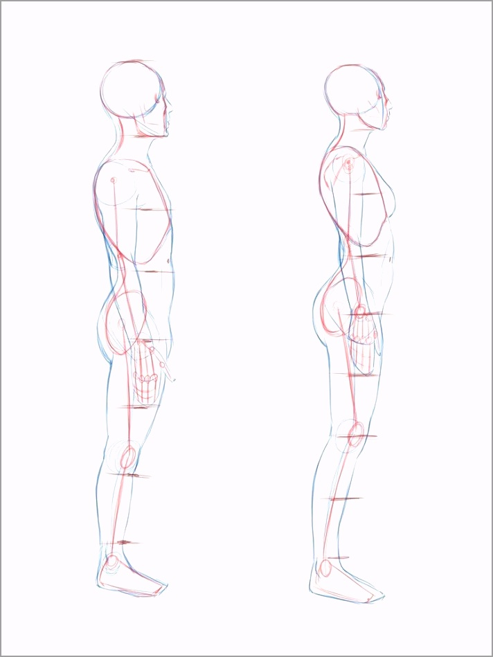 790c2cc1fbd4d68b3b515ac6910f63ca image for human body side view body reference drawing human 774 1032 tupea